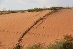 Dune rouge