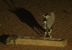 Oryx et Chacal