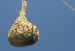 nest/nid