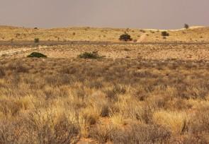les dunes de Kiliekrankie
