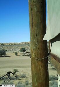 camera trap- Springboks redescendent dans la vallée