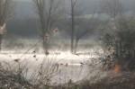 brume/mist