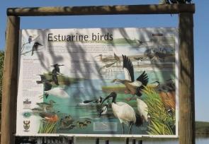 Estuarine birds