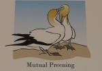 mutual preening