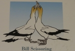 bill scissoring