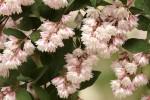 buisson en fleur