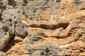 nids dans la falaise