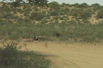 Oryx mort à Lijersdraai