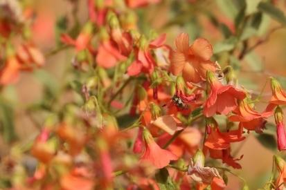 fleur + insecte
