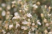 fleurs blanches en buisson