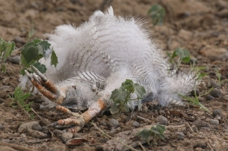 oiseau mort à Lijersdraai