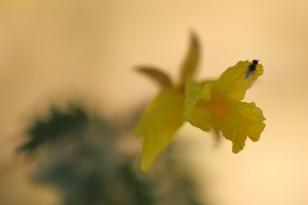 fleur - macro