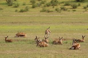 Springbok, la nurserie