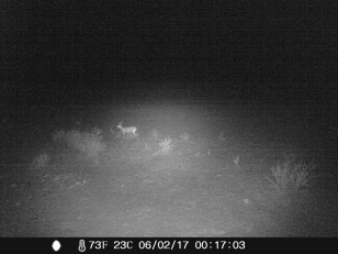 camera trap - Steenbok