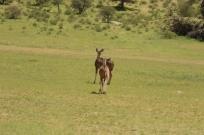 Hanri et le gang + Kudu