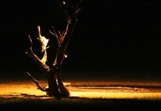 camp - pleine lune sur le waterhole