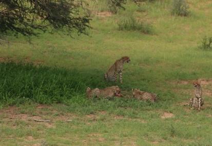 Cheetah - Hanri et le gang - 3ème kill