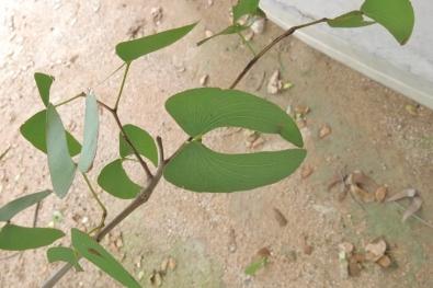 feuille de Mopane - picnic spot