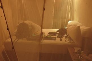 camp - chambre
