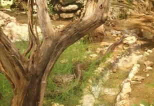 Snake park African Rock Python