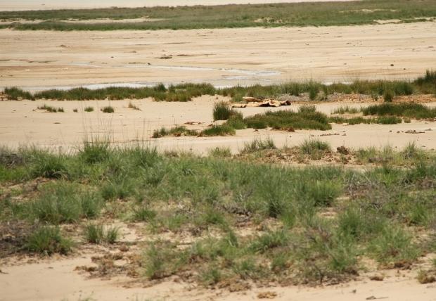 restes de Girafe