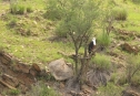 African Fish Eagle/Aigle vocifère