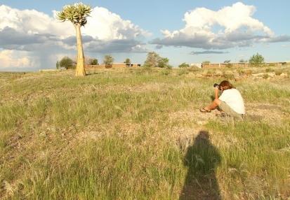 Quiver Tree/Aloe dichotoma