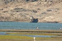 bateau échoué et Lesser Flamingo/Flamant nain