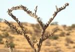 arbre à oiseaux