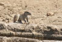 Ground Squirrel / Ecureuil fouisseur+ Dragonfly