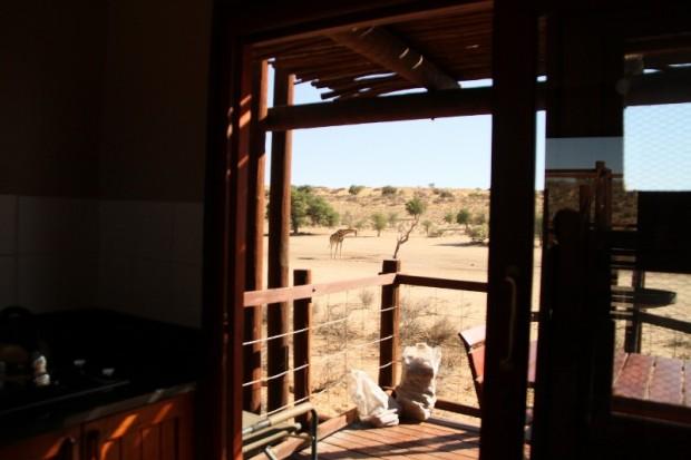 Girafe à Urikaruus