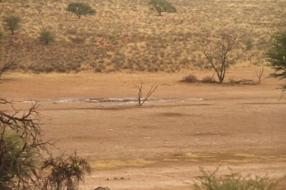 Urikaruus... après le déluge !