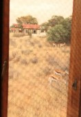 Springboks vus de la chambre à KTC