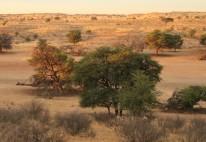 Springboks à KTC