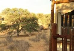 paysage - Springbok