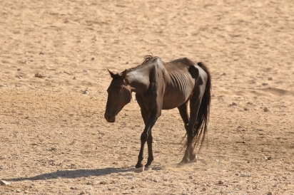 Wild Horses/Chevaux sauvages